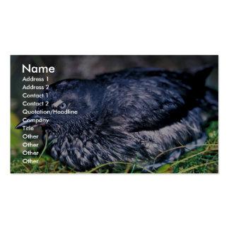 Cassins Auklet Business Card