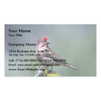 Cassin's Finch Business Cards