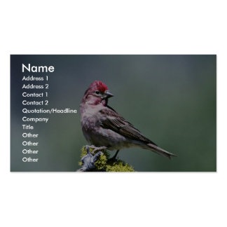 Cassin's Finch Business Card