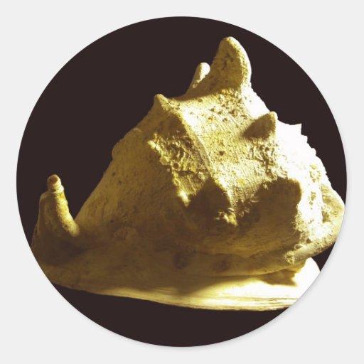 Cassis cornuta Shell Back on Black Classic Round Sticker