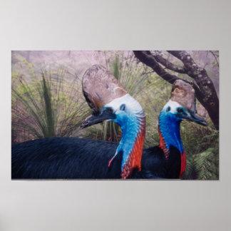 Cassowaries in the Rainforest Poster