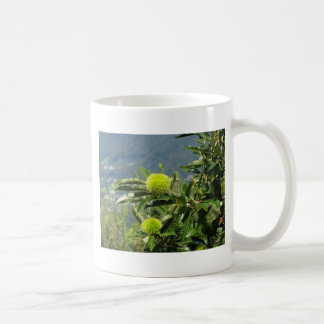 Castañas que cuelgan en el árbol taza básica blanca