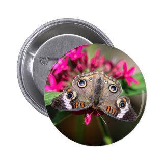 Castaño de Indias común Junonia Coenia Pin Redondo 5 Cm