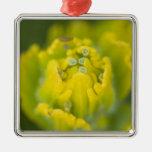 Castilleja de oro indio 2 de la brocha adorno de navidad