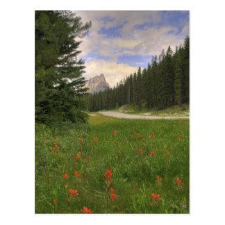 Castle Mountain Banff Postcard