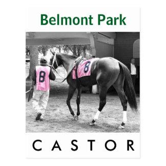 Castor by Malibu Moon Postcard