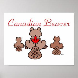Castor canadiense póster
