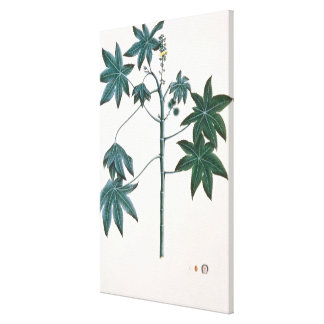 Castor oil plant, c.1801-4 canvas print