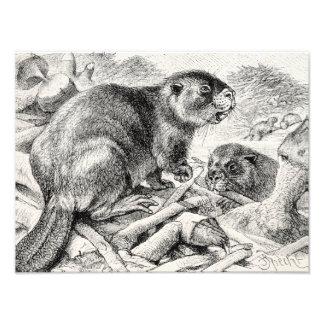Castores y presa retros del ejemplo del castor del cojinete
