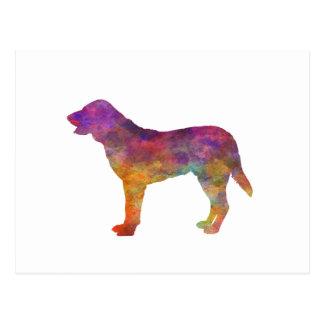 Castro Laboreiro Dog in watercolor Postcard