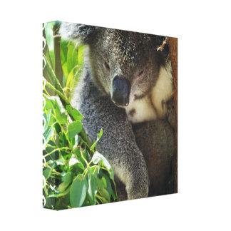 Casual Koala Canvas Print
