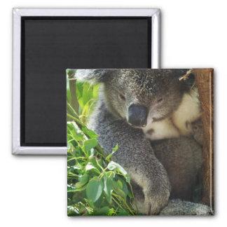 Casual Koala Magnet