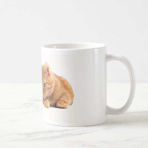 cat13.jpg taza