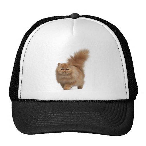 cat14.jpg gorro