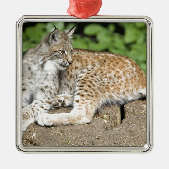 cat35.jpg metal ornament