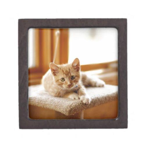 cat415335 cajas de joyas de calidad