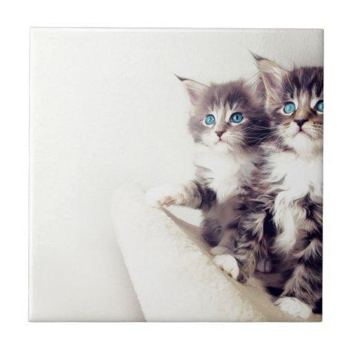 cat777 tejas