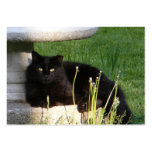 Cat 120 ~ ATC Large Business Cards (Pack Of 100)