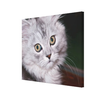 Cat [20x16] inches Canvas Print