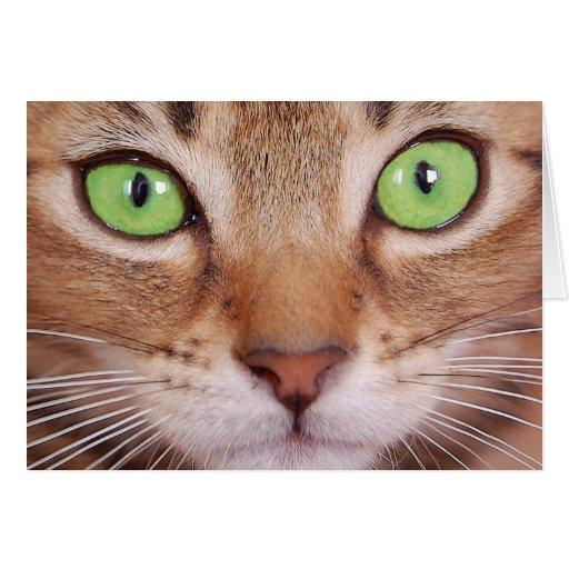Cat 2 card