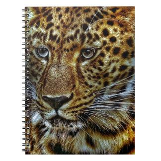 cat-301154  cat rauptier zoo wild animal portrait notebook