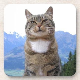 cat-369205  cat pet dear domestic cat coasters