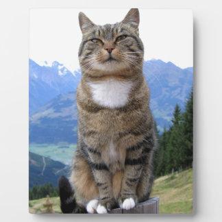 cat-369205  cat pet dear domestic cat photo plaque