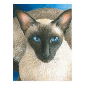 cat 377 postcard