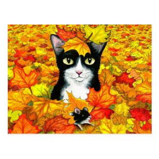 cat 447 postcard