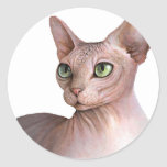 Cat 578 Sphynx white background Pegatina Redonda