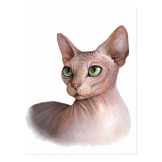 Cat 578 Sphynx white background Postcard