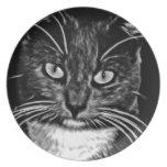 cat-75957.jpg plato