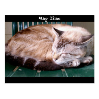Cat 7, Nap Time,Postcard Postcard