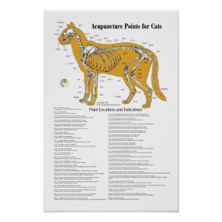 Cat Acupressure Acupuncture Points Chart Poster
