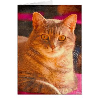 Cat Aglow Card