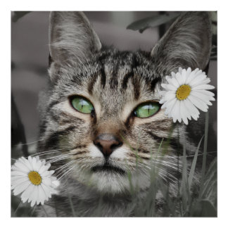 Cat Among The Daisies Poster Print