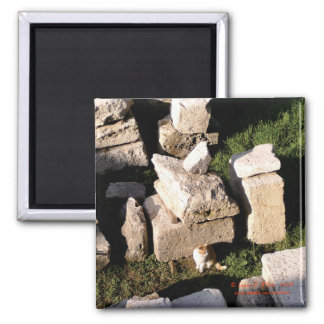Cat Among the Ruins Refrigerator Magnets