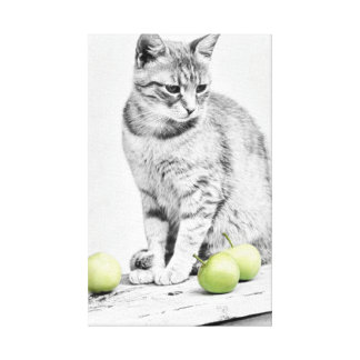 Cat and Aplles Wrapped Canvas Canvas Prints