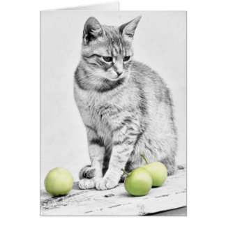 Cat and Apples Greeting Card