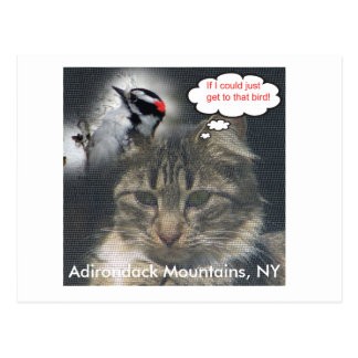 cat-and-bird, Adirondack Mountains, NY Postcard