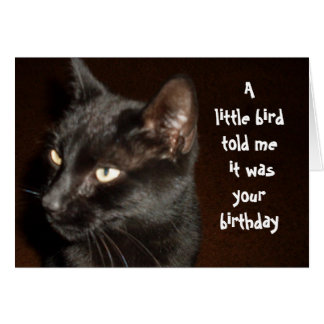 CAT AND BIRD BIRTHDAY card