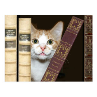 Cat and books postcards
