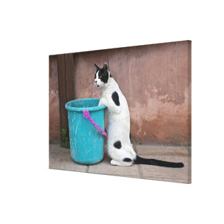 Cat and bucket, Chania, Crete, Greece Canvas Print