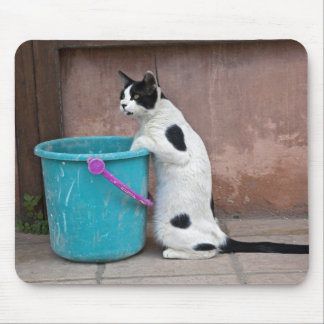 Cat and bucket, Chania, Crete, Greece Mousepads