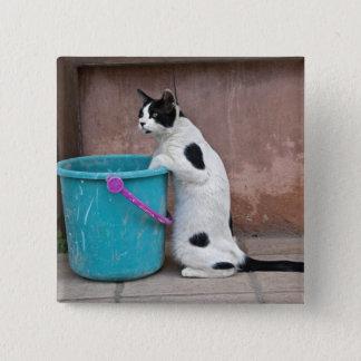 Cat and bucket, Chania, Crete, Greece Pinback Button