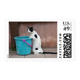 Cat and bucket, Chania, Crete, Greece Postage