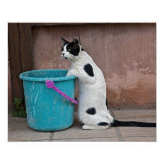 Cat and bucket, Chania, Crete, Greece Print