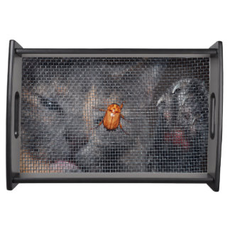 Cat and Christmas Beetle Food Tray