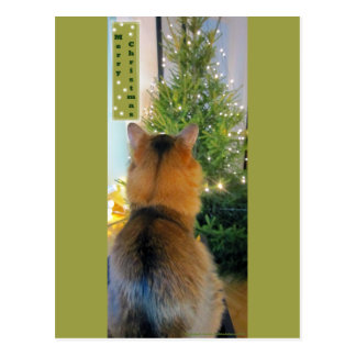 Cat and Christmas Tree Postcard