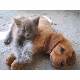 Cat and dog friendship Photo Sculpture